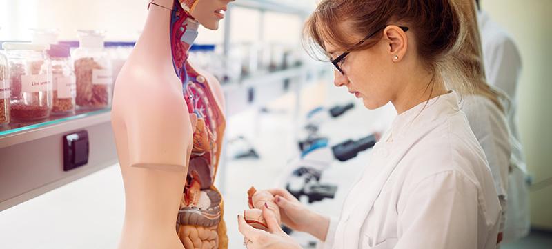 Dame i hvit frakk foran modell av kroppens indre organer. Foto.